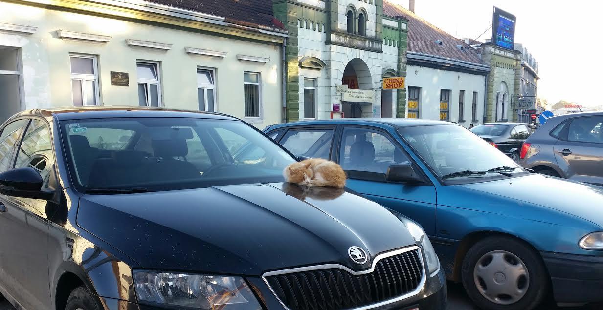 veliko opterećenje maca